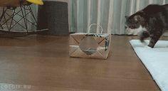Maru Wears A Paper Bag