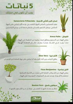 Growing Lilies, Growing Plants, House Plants Decor, Plant Decor, Indoor Garden, Indoor Plants, Sansevieria Trifasciata, Home Vegetable Garden, Amazing Flowers