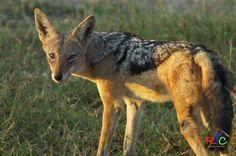Wildlife photography courses in the Okavango Delta in Botswana.