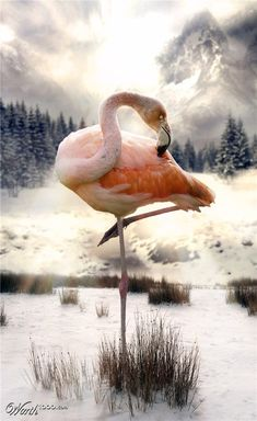 This reminds me of a ballerina. I Wonder if here has ever been a broadway show with Ballerina's dressed as Flamingo's ? Found this cute flamingo photo while browsing :) Pretty Birds, Beautiful Birds, Animals Beautiful, Flamingo Art, Pink Flamingos, Flamingo Photo, Animals And Pets, Cute Animals, Flamingo Pictures
