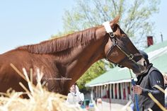 Dortmund. He is gorgeous!
