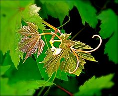 DIGITAL DOWNLOAD Nature Photography 'Promise' Green Gold Grape Vine new growth shoot - pinned by pin4etsy.com