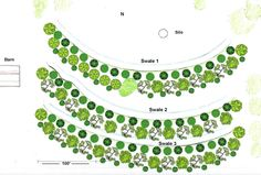 geoff lawton swale pictures | Food Forest Layout between Swales More