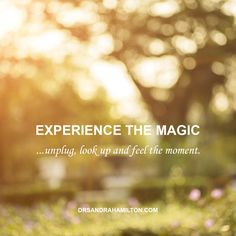 Experience the magic.