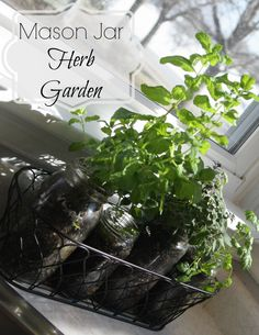 Affordable and Simple: a mason jar herb garden is a great way to bring a little greenery to your kitchen and provides you with year round fresh herbs.