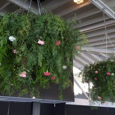 Floral chandelier @thepiergeelong for Tess & Justin #happilyevercole thanks to @memphis_hire for the rigging & frame.Roses from @leighriverroses #theflowerdispensary