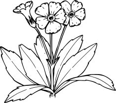 Line Drawing Of Flowers - Primrose Coloring Book Drawing Tree PNG - primrose, ar. Line Drawing Of Flowers – Primrose Coloring Book Drawing Tree PNG – primrose, art, artwork, bla Flower Line Drawings, Drawing Flowers, Toddler Arts And Crafts, Landscaping Trees, Coloring Book Art, Primroses, Book Drawing, Vector Flowers, Cat Face