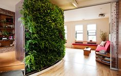 living wall in your home!! awesome for the air quality and style points ;)