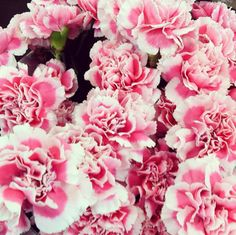 Dave The Handyman Gamma Phi Beta, Phi Mu, Sorority Sugar, Sorority Life, Easy Diy Crafts, Easy Diy Projects, Beyond Beauty, Pink Carnations, Beautiful Flowers