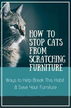 Is your cat scratching your furniture? Here are some solutions that will make your kitty happy and save your furniture from damage. Raising Kittens, Cats And Kittens, Stop Cat Scratching Furniture, Scratching Post, Cat Care Tips, Pet Tips, Pet Care, Cat Brain, Furniture Scratches