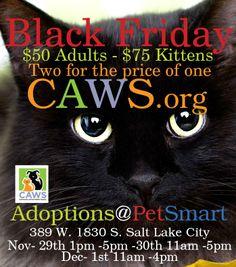 Black Friday cat special!