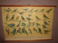 """Oude schoolplaat met 32 vogels die rond ons huis voorkomen van H.J. Slyper . titel van de plaat is """" Vogels bij ons huis No.2 """" met o.a. Boomklever , Goudvink , Tuinfluiter, Groenling e.v.a."""