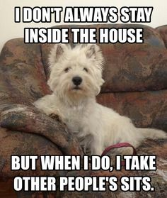 """Finlay does this to me ALL THE TIME! I will get up from the sofa to get something, and when I come back, he has """"stolen"""" my seat. :)"""