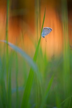 Lonely butterfly...