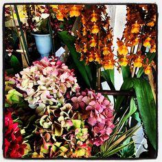 Acesflowers.com #Padgram