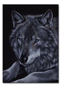 """Wolf 6 - 5x7"""" - Colored pencils"""