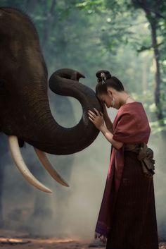Thailand Asian women folk have a love bond with his elephants. Image Elephant, Elephant Love, Elephant Art, Elephant Images, Elephant Photography, Animal Photography, Animals Beautiful, Cute Animals, Thai Elephant