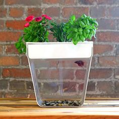 If you want to take the next step in your relationship, but your landlord won't let you have a dog, this self-cleaning fish tank also grows ...