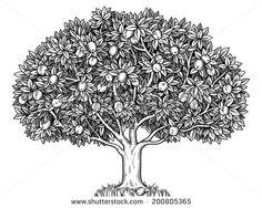 Old apple tree illustration vintage clip art image autumn engraved apple tree full of ripe apples thecheapjerseys Gallery