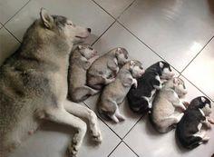20 cães que são imensamente orgulhoso de seus filhotes