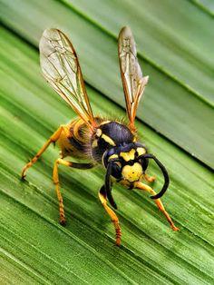 Fieggentrio: Waar zitten vliegende insecten tijdens een regenbu...