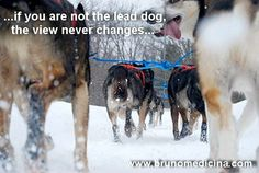 Because if you are not the lead dog, the view never changes…Bruno Medicina   www.brunomedicina.com #hypercoaching #coaching #hyperliving  #training #seminar #selling #leadership