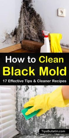 Sick & tired of living in a messy house, but hate the thought of cleaning? Use these 7 hacks to discover ways to clean every room in your house FAST. Cleaning Mold, Household Cleaning Tips, Cleaning Recipes, House Cleaning Tips, Deep Cleaning, Cleaning Hacks, Shower Cleaning, Kill Black Mold, Clean Black Mold