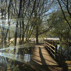 Matinale balade  à l'étang de Courtille à#Guéret