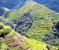 The Banaue rice terraces of the are a designated World Heritage site and now listed as one of the world's most endangered places. Resorts In Philippines, Baguio Philippines, Filipino, Banaue Rice Terraces, Aquatic Ecosystem, Natural Wonders, World Heritage Sites, Tourism, National Parks