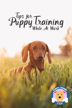 How to actually have a dog while working. Here are a some tips that will help you train your puppy while you leave for work.