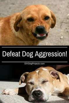 Sex is more important than breed when it comes to dog aggression, but that's just part of the story. There's much more to understand, and we explain it all.