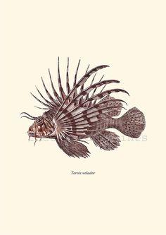 Antique Lionfish Print Pterois 1874 Restored