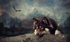 #Finnish #Lapphund #Dog #Art #FinnishLapphund