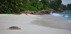 Inspiración veraniega: 11 playas para disfrutar del verano