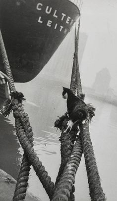 Thurston Hopkins. Cats of London. 1951   [::SemAp FB || SemAp::]