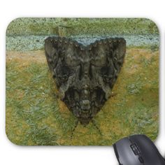 Moth, Mousepad. Mouse Pad