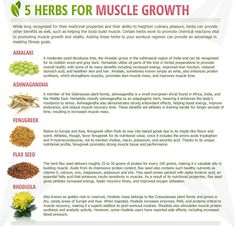 What herbs can do for your muscles to grow lean https://www.corposflex.com/animal-stak-21-packs-universal-nutrition