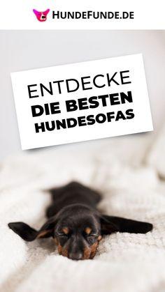 Wood Dog Bed, Dog Travel, Small Dogs, Luxury, Ideas