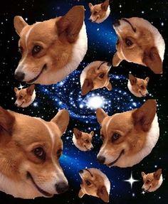 CORGIS IN SPACE best. Tumblr. ever.
