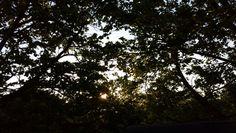 Sun set♡