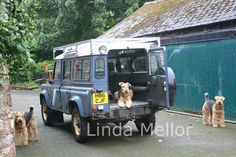 Airedales and Land Rovers 2