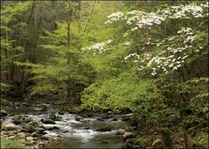 spring in the woods pictures | Photo Friday: Dogwood in Spring | Refuge Watch