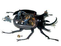 CON.CA - Micromachina: Beetles as Mechanised Shells by artist Scott Bain