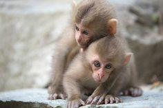 Two cutie-pie baby monkeys. :-)