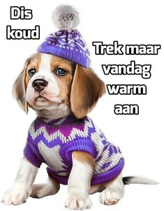 Lekker Dag, Afrikaanse Quotes, Goeie Nag, Goeie More, Winter Images, Day Wishes, Good Morning Quotes, Cute Quotes, Mornings