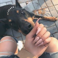 Find images and videos about cute, nails and dog on We Heart It - the app to get lost in what you love. Cute Puppies, Cute Dogs, Dogs And Puppies, Doggies, Cute Nails, Pretty Nails, Doberman Love, Manicure Y Pedicure, Doberman Pinscher