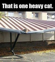 That is one heavy cat - funny cat meme - http://jokideo.com/that-is-one-heavy-cat-funny-cat-meme/