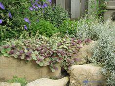 Rock garden 1_bof.jpg