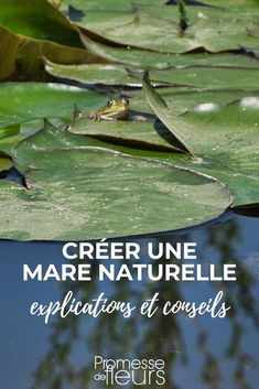 Créer une mare naturelle dans son jardin :  conseils pratiques #jardin #jardinage #mare #bassin #aquatique Cultural Architecture, Back Gardens, How To Look Pretty, Plant Leaves, Plants, Irene, Basin, Aquarium, Cocktails