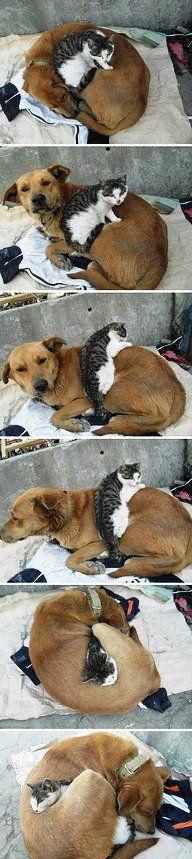 kedili köpekli aptal videoları, resimleri vs. hiç sevmem ama hoşuma gitti bu ya.  